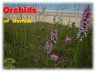 Orchids - Norfolk and Norwich Naturalists' Society