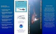 Thresher Shark Best Fishing Practices