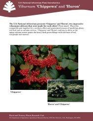 Viburnum 'Chippewa' - National Arboretum - US Department of ...