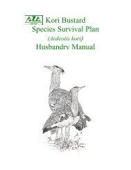 Kori Bustard Husbandry Manual - Gruiformes
