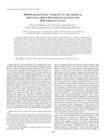 erythroxylaceae - American Journal of Botany