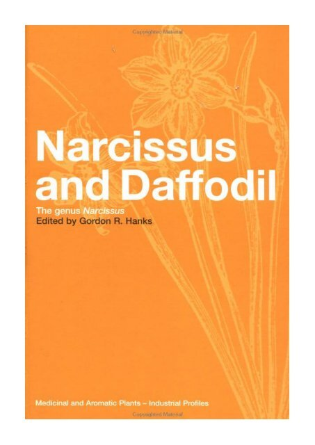 foto de Narcissus and Daffodil