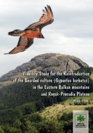 Viability Study for the Reintroduction of the Bearded vulture