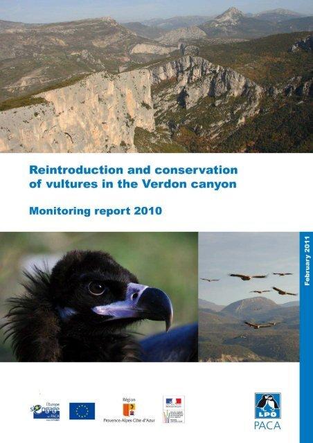 Vultures Verdon 2010 - LPO Mission rapaces