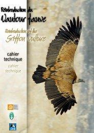 Griffon vulture - LPO Mission rapaces