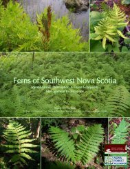 Ferns of Southwest Nova Scotia