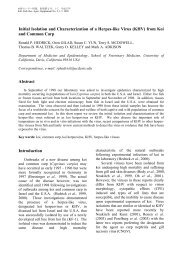 Initial Isolation and Characterization of a Herpes-like Virus (KHV ...