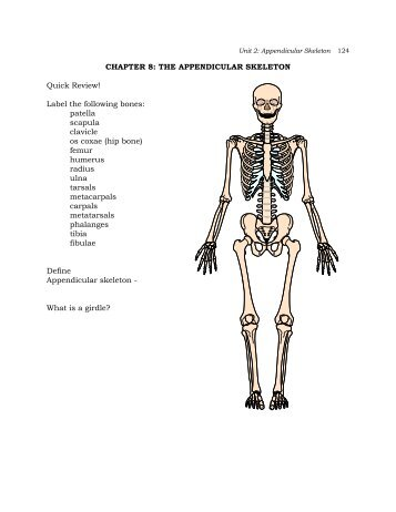 chapter 8 the appendicular skeleton?quality=85 physio appendicular skeleton the pectoral girdle