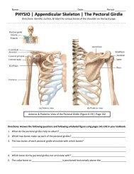 PHYSIO | Appendicular Skeleton | The Pectoral Girdle