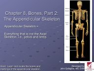 Chapter 8, Bones, Part 2: The Appendicular Skeleton