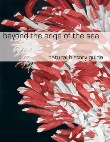 beyond the edge of the sea - College of William and Mary