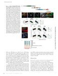 EPI64 regulates microvillar subdomains and structure - Page 2