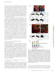 EPI64 regulates microvillar subdomains and structure - Page 3
