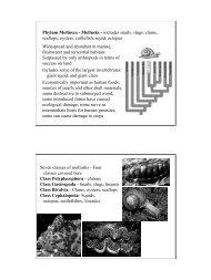 Phylum Mollusca - Mollusks - includes snails, slugs, clams, scallops ...