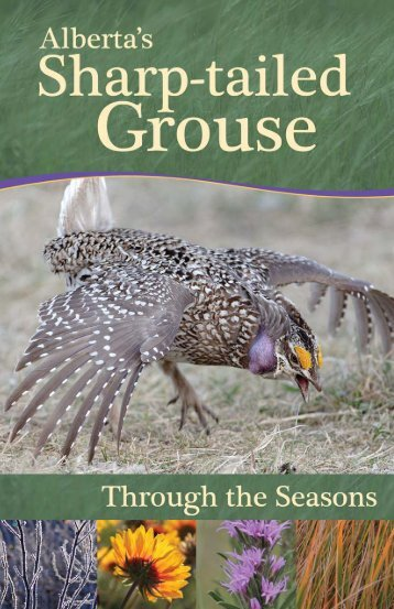 Alberta's Sharp-tailed Grouse - Alberta Conservation Association