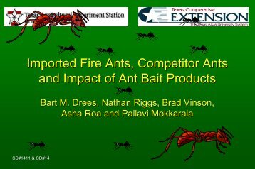 Imported Fire Ants, Competitor Ants and Impact of - eXtension