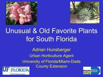 Unusual & Old Favorite Plants for South Florida - Miami-Dade ...