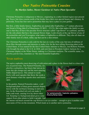 Our Native Poinsettia Cousins - Tarrant County Master Gardener ...