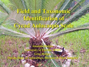 Field and Taxonomic Identification of Cycad Aulacaspis scale