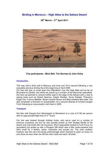 Birding in Morocco – High Atlas to the Sahara Desert - Birdtours.co.uk