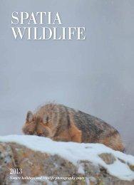 Nature holidays and wildlife photography tours - Spatia Wildlife