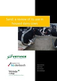 Sand: a review of its use in housed dairy cows - Vetvice