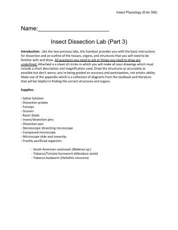 earthworm dissection lab instructions. Black Bedroom Furniture Sets. Home Design Ideas