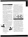 Anatomical Homology (pdf, 1.03MB) - Intranet - Page 6