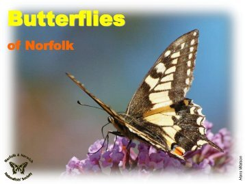 Butterflies - Norfolk and Norwich Naturalists' Society