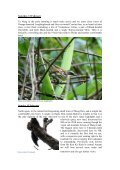 Endemic birds and endangered primates in the - Birdwatching ... - Page 5