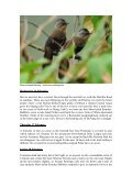 Endemic birds and endangered primates in the - Birdwatching ... - Page 7