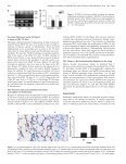 Overexpression of Placenta Growth Factor Contributes to the ... - Page 4