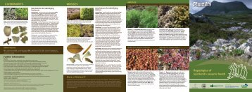 Acrocarpous moss - Plantlife