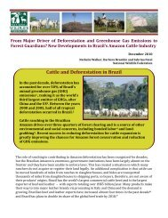 Cattle and Deforestation in Brazil - Forest Justice