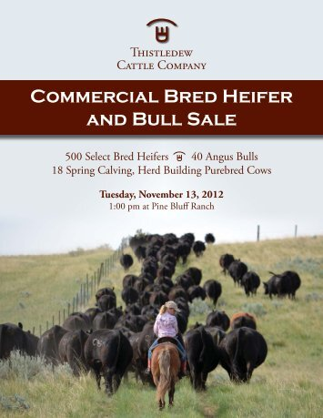 Commercial Bred Heifer and Bull Sale - The Cattle Range
