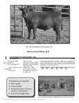 Commercial Bred Heifer and Bull Sale - The Cattle Range - Page 4