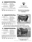 Commercial Bred Heifer and Bull Sale - The Cattle Range - Page 5