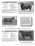 Commercial Bred Heifer and Bull Sale - The Cattle Range - Page 7
