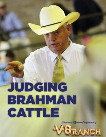 judge Brahman cattle - V8 Ranch