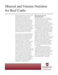P2484 Mineral and Vitamin Nutrition for Beef Cattle - MSUcares