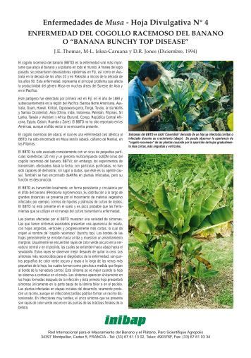 Banana bunchy top disease - Bioversity International