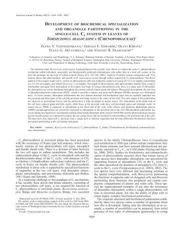borszczowia aralocaspica - American Journal of Botany
