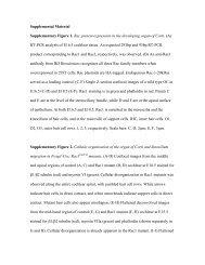 Supplemental Material Supplementary Figure 1. Rac protein ...