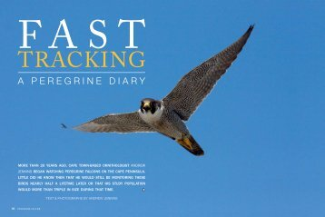 Fast tracking: a Peregrine diary