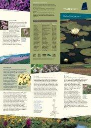 Wild Flowers leaflet - Shetland Heritage