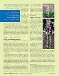Washington's native orchids - Washington Native Orchid Society - Page 5