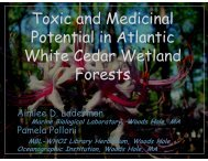 Toxic and Medicinal Potential in Atlantic White Cedar Wetland Forests