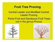 Fruit Tree Pruning Central Leader and Modified Central