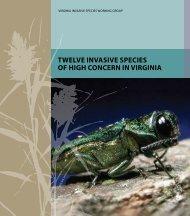 Twelve InvasIve specIes of HIgH concern In vIrgInIa