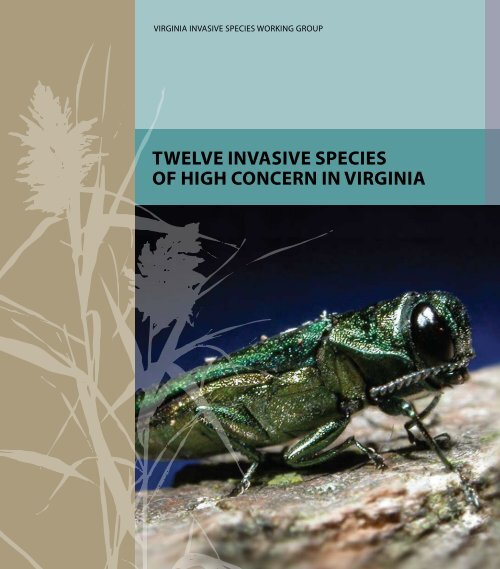 Twelve InvasIve specIes of HIgH concern In vIrgInIa